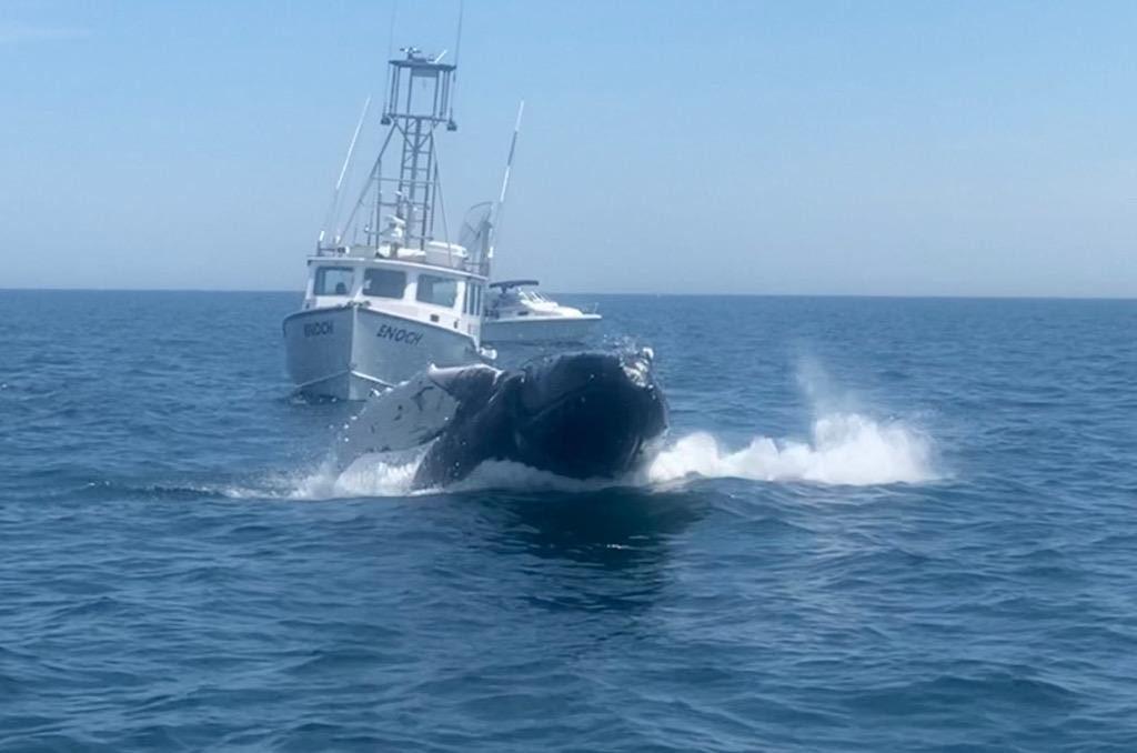 enoch whale 1