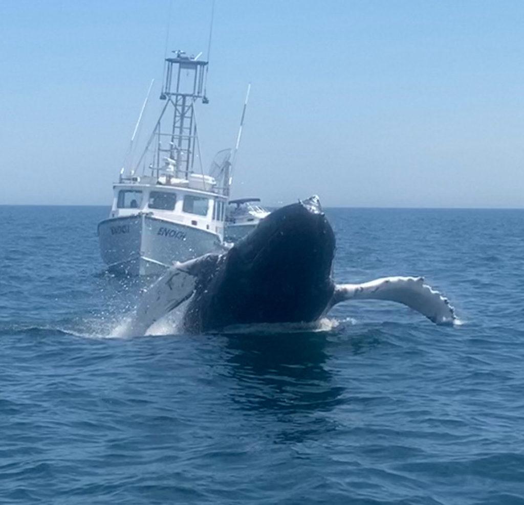 enoch whale 6