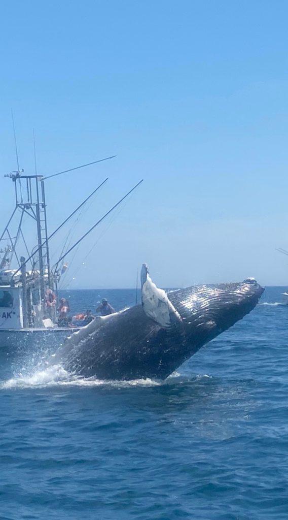 enoch whale 9