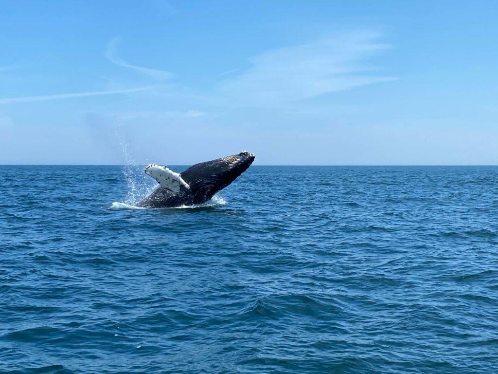 enoch whale 7