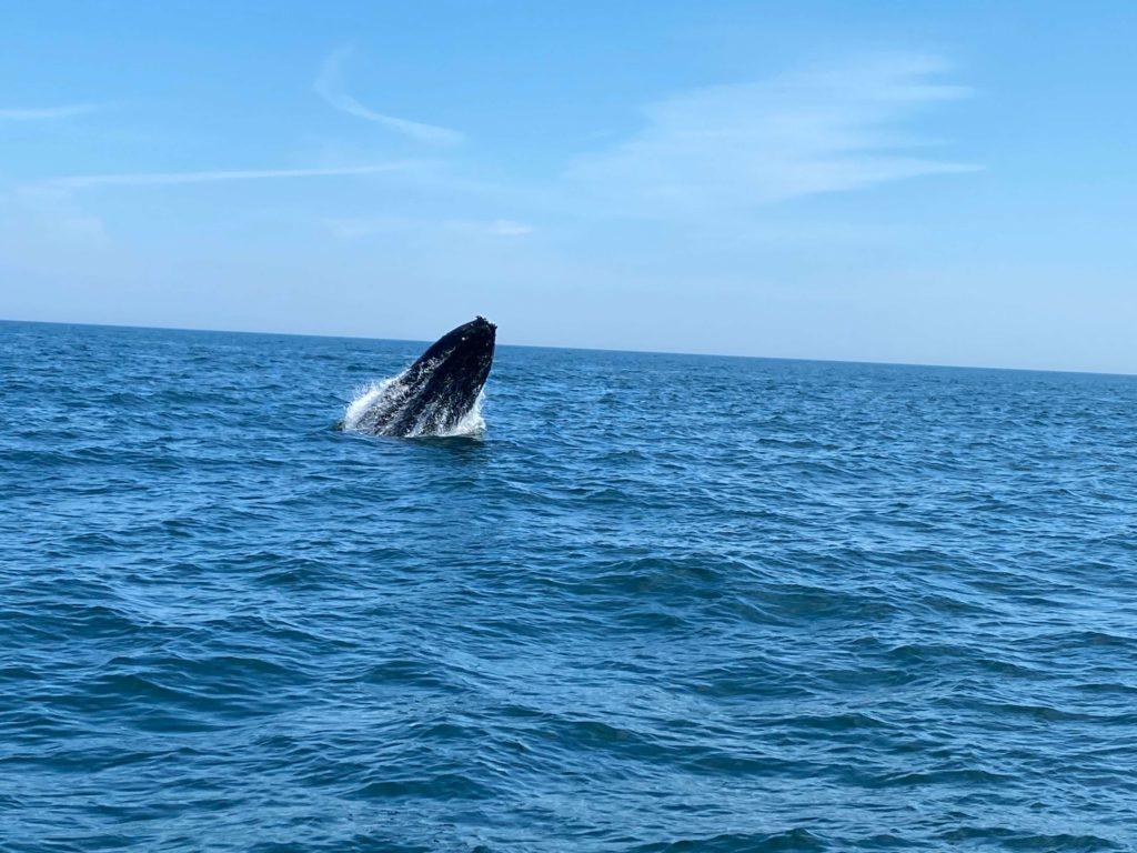 enoch whale 5