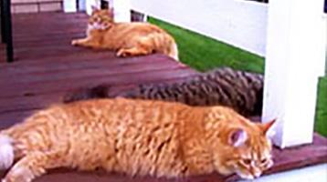 The Friendly Feline Family