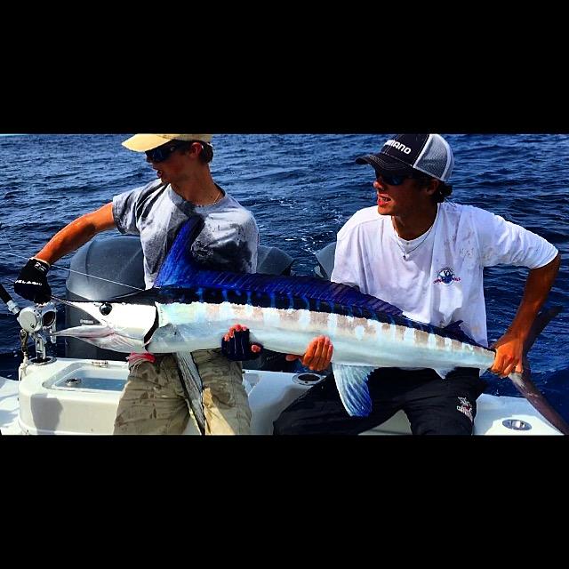 White Marlin 2