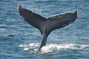 whale watch provincetown