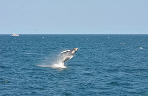 Provincetown Whale Watching Tour