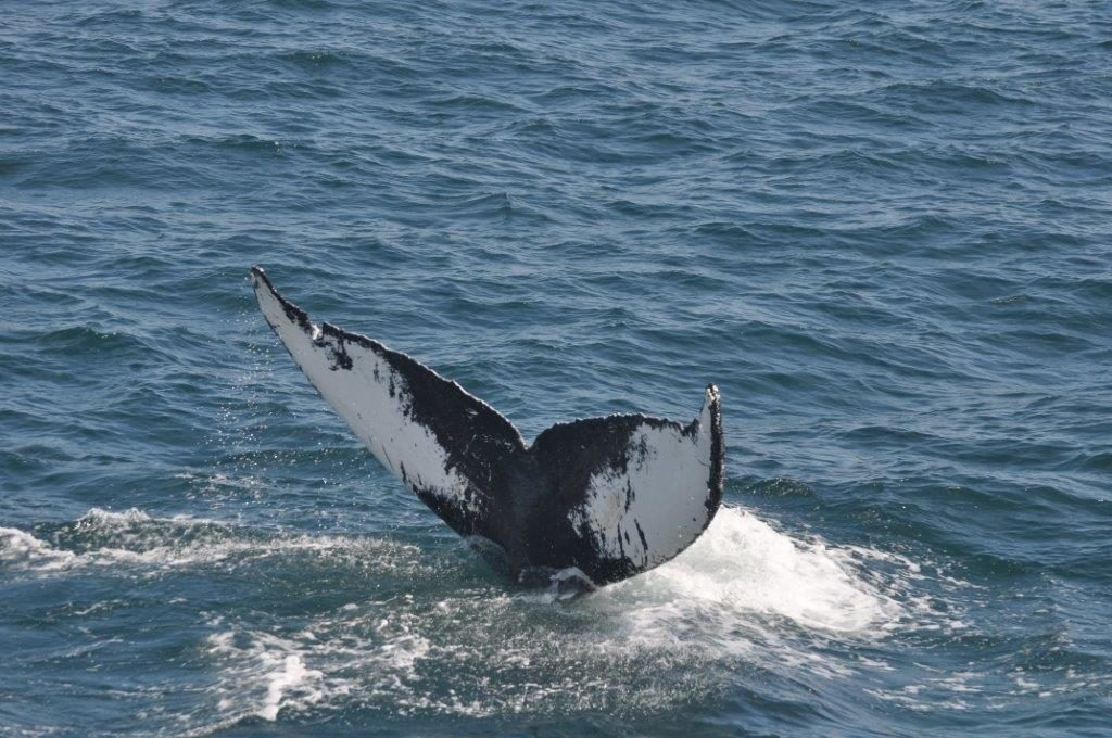 cape code whale watching