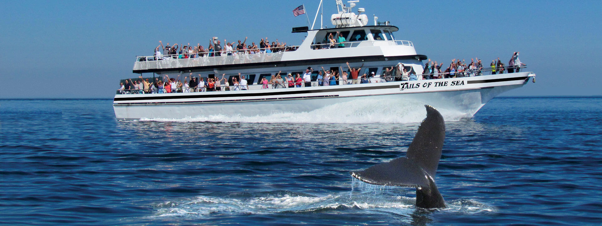 Plymouth whale watching tours