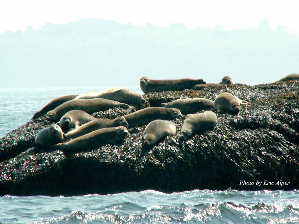 many-seals