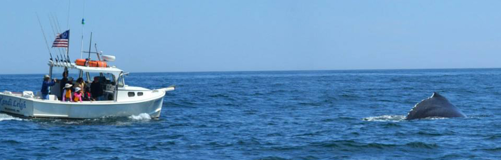 Robertson Sea Tours