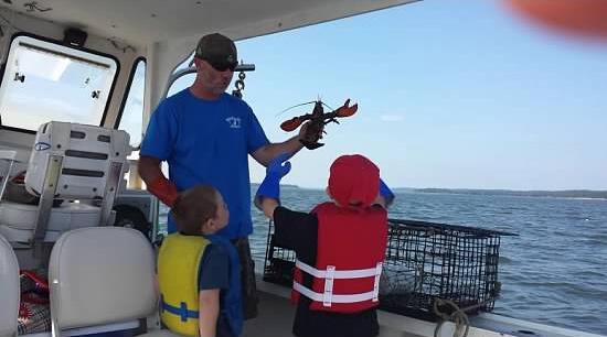 Robertson Sea Tours - Lobster