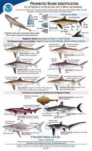 New Shark ID chart image1