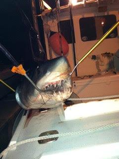 Boston Shark Fishing Elizabeth Marie 4