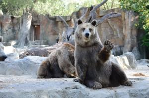 bear-1323389_1920