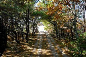 Provincetown Dune Forest Entrance